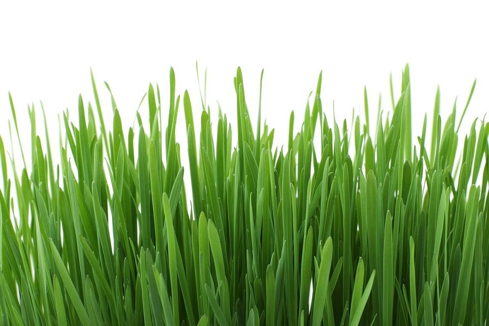 Met deze tips is het gras nooit meer groener bij buren!