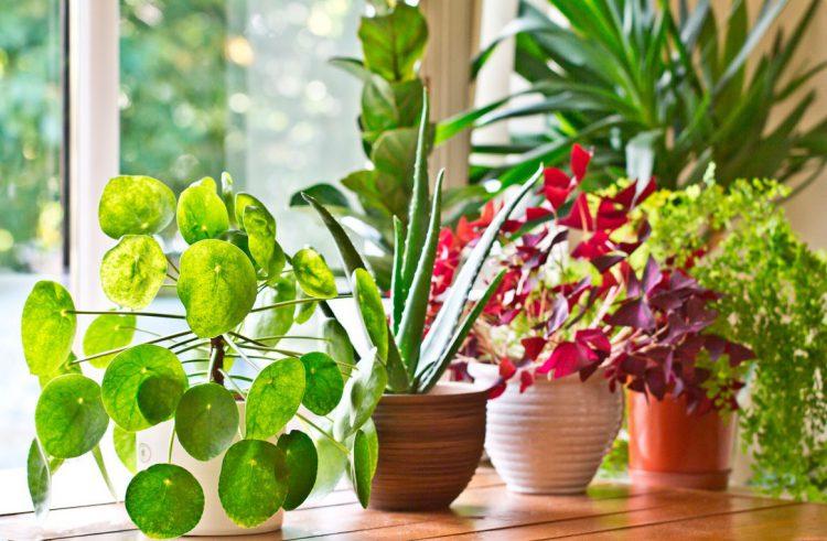 Rouwvliegjes in plant